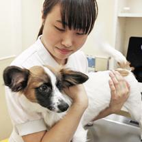 入院動物の治療補助