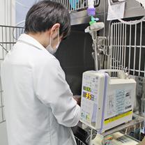 入院動物の治療